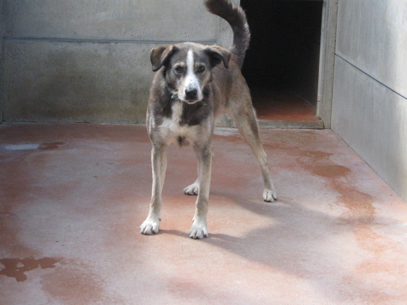 SPARK X husky (m) né 01/04/2000 /7 ans de box  REF:44 DECEDE Rescue11