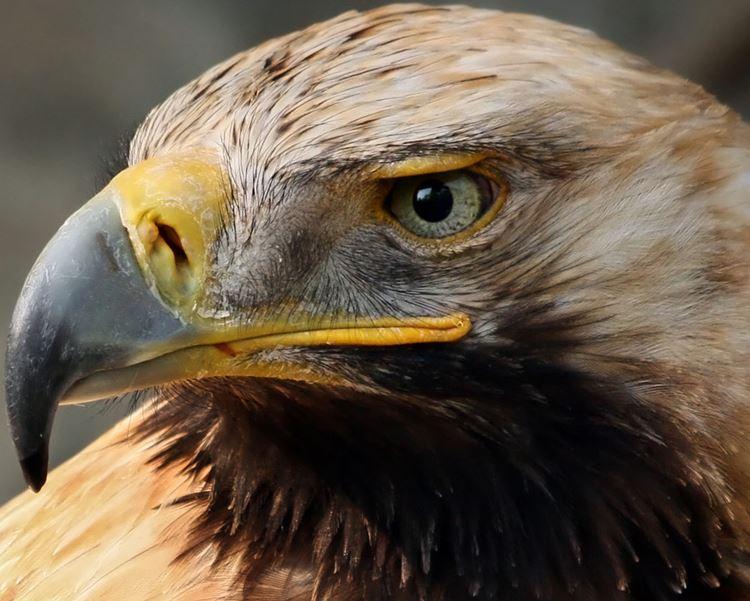 Legend of the Dreamcatcher Eagle11