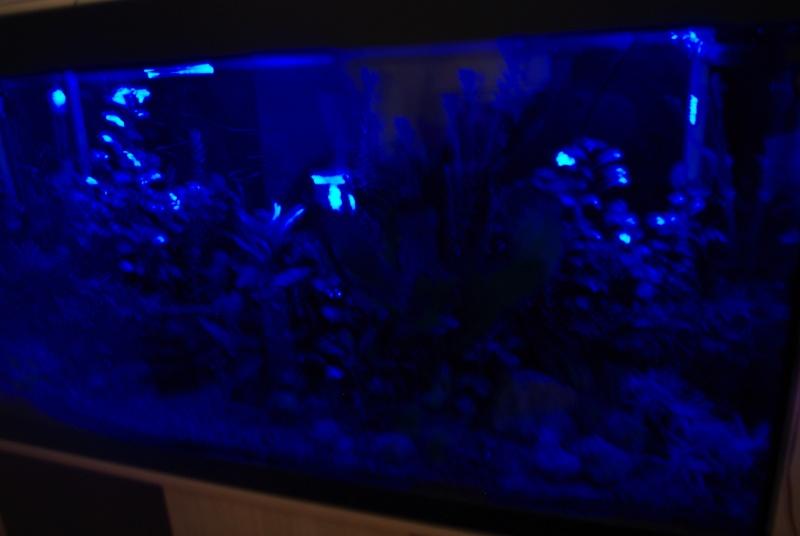 led bleue Photo_25