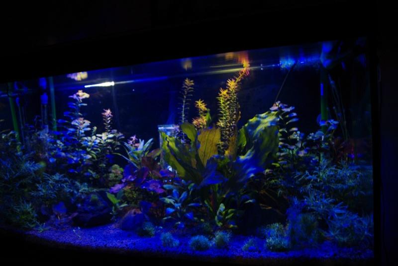 led bleue Photo_26