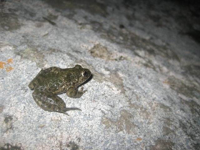 herping du 18 mars 2009 - amphibiens... Img_3311