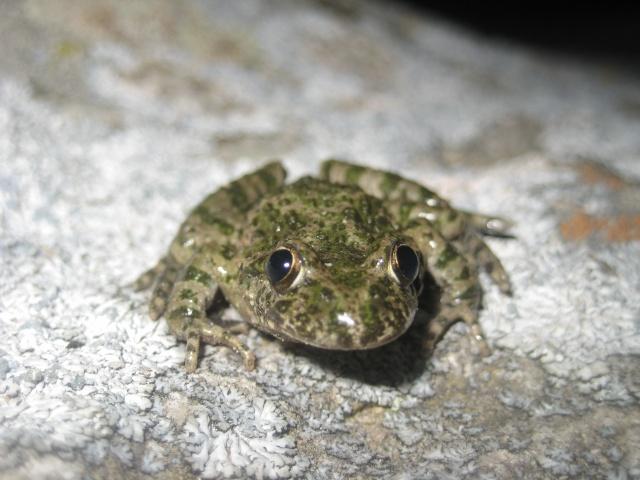 herping du 18 mars 2009 - amphibiens... Img_3312