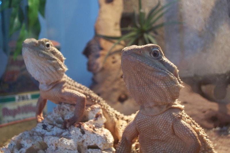 La famille Réptiles... 100_4916