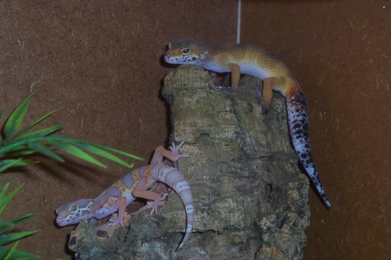 La famille Réptiles... Photo_26