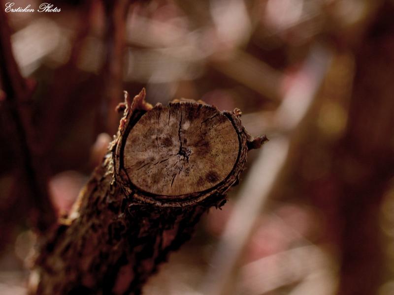Vision numérique d'Ersticken Photo_25
