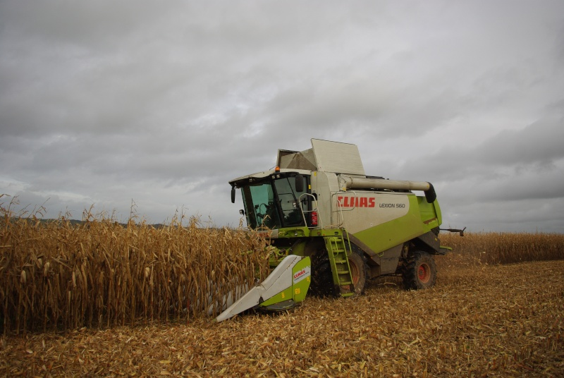 Moissons maïs 2009 Imgp7014