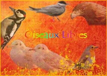 Oiseaux libres