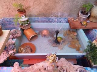 bassin pour tortue d eau Pt_bas11
