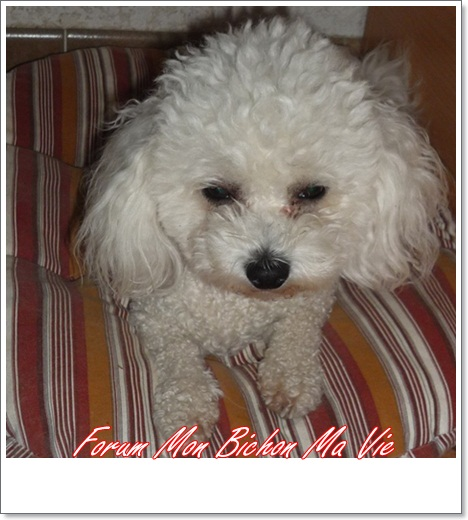 Album photos des bichons Carly10