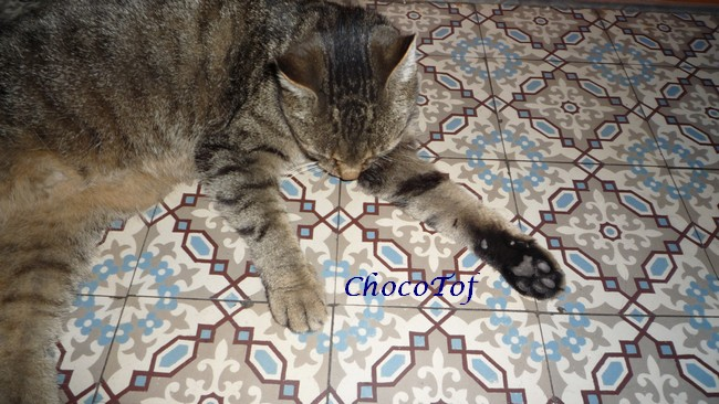 nos animaux: 2 chattes 3 chiennes 2009_047