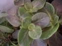 des kipics , des sedums des succulentes etc Sept210