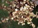 des kipics , des sedums des succulentes etc Sept310