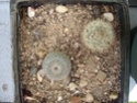 des kipics , des sedums des succulentes etc Sept410