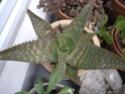 des kipics , des sedums des succulentes etc Sept710