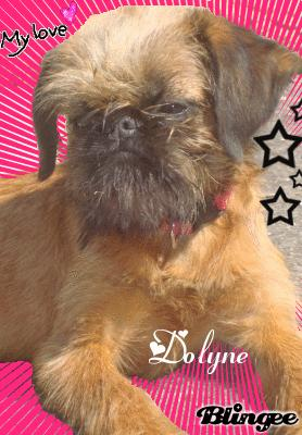 Dolyne Du Clan Des Petits Gremlin's... 45736310