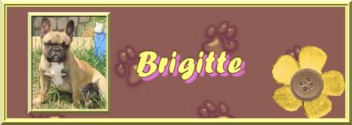 le petit dernier Brigit16