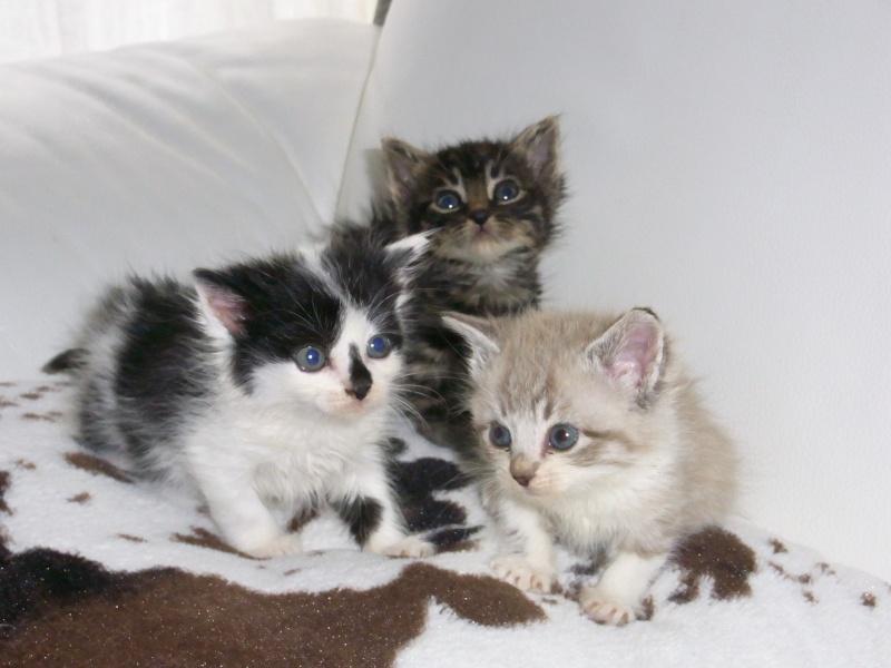 ADOPTEE le 19/06/13, Lilou (Sissi), adorable chatonne Rimg0120