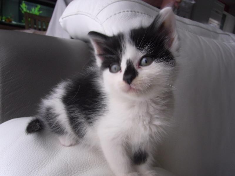 ADOPTEE le 19/06/13, Lilou (Sissi), adorable chatonne Rimg0210
