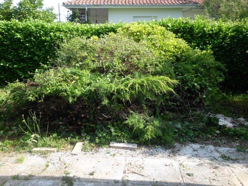Frelons asiatiques dans le sol ? Img_0118