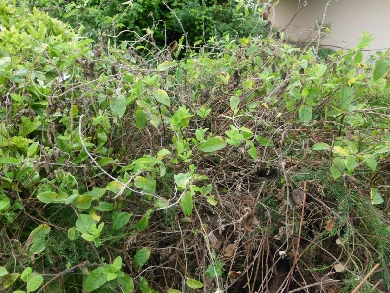 Frelons asiatiques dans le sol ? Img_0121