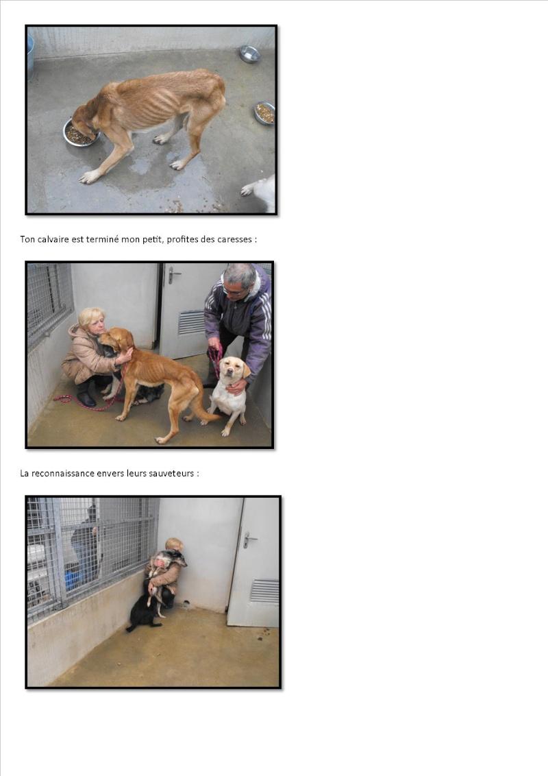 Nouvelles des chiens maltraités d'Ecuras Arrive11