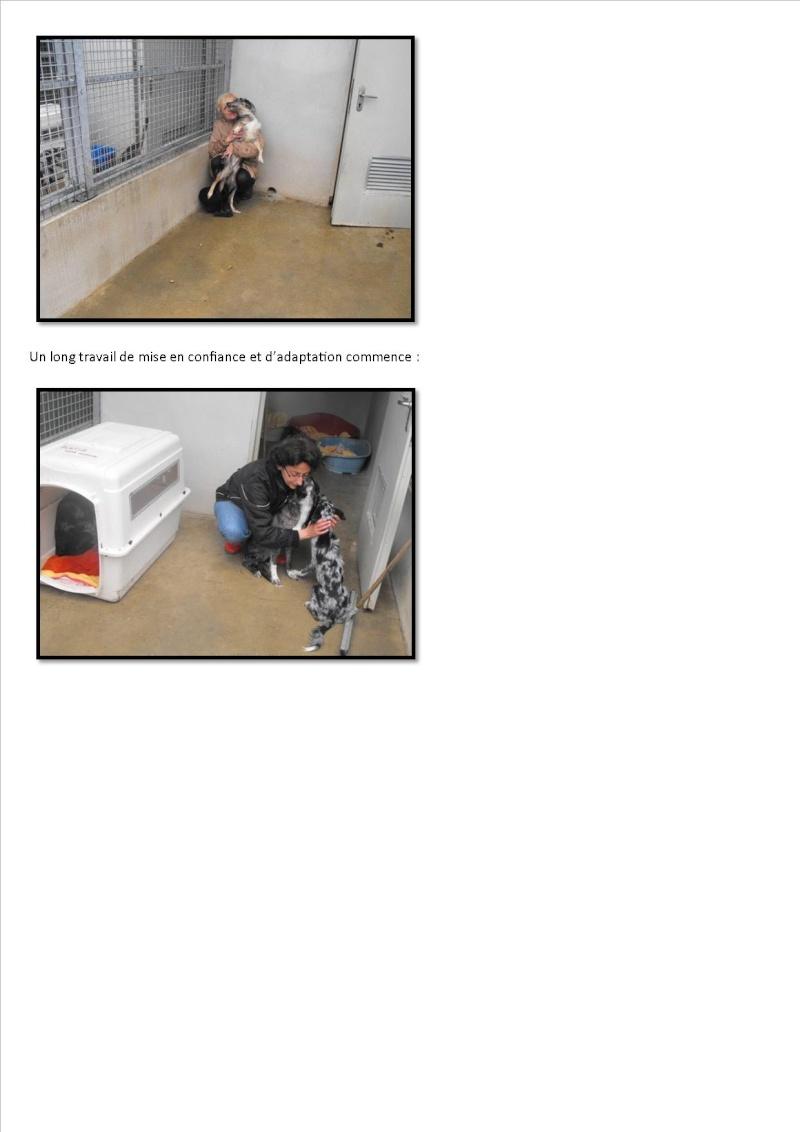 Nouvelles des chiens maltraités d'Ecuras Arrive12