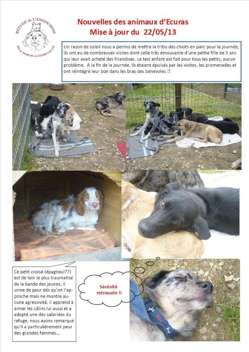 Nouvelles des chiens d'Ecuras du 22052013 Nouvel13