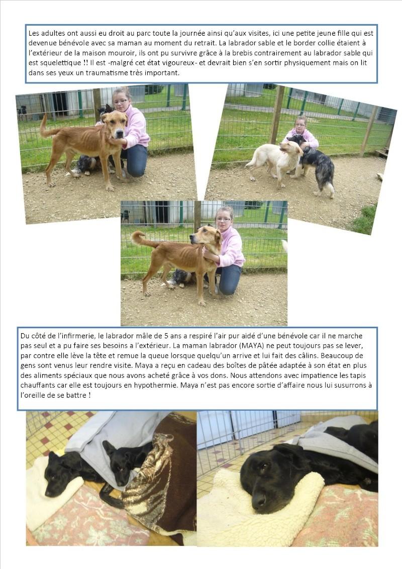 Nouvelles des chiens d'Ecuras du 22052013 Nouvel14