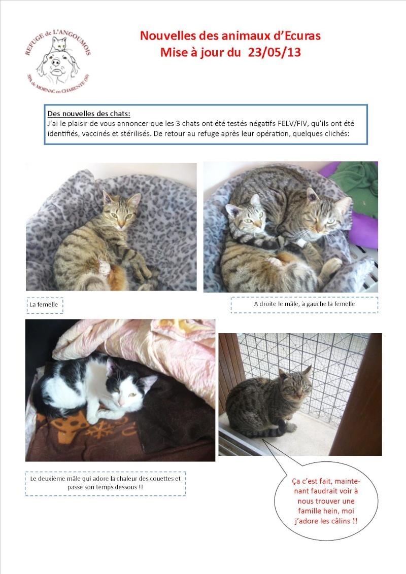 Nouvelles des animaux d'Ecuras du 24 05 13 Nouvel16