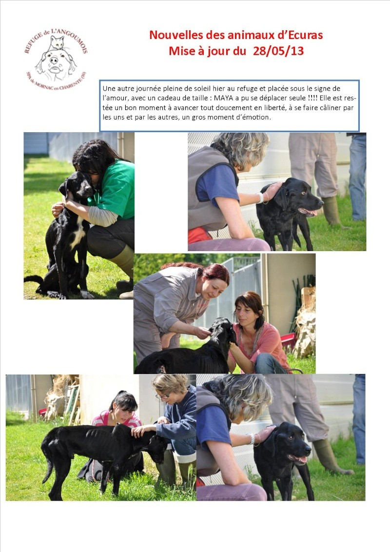 Nouvelles des animaux d'Ecuras du 28 05 13 Nouvel29