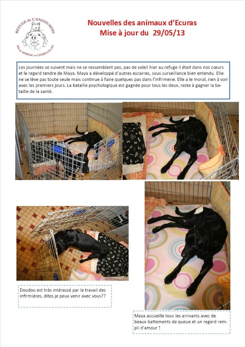 Nouvelles des animaux d'Ecuras du 290513 Nouvel32