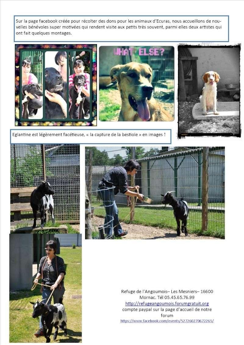 Nouvelles des animaux d'Ecuras du 31 05 13 Nouvel45