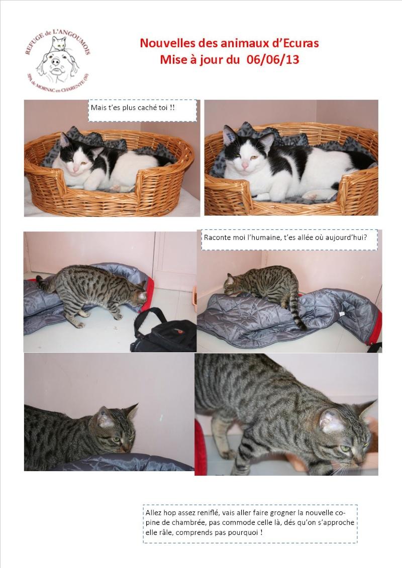 Nouvelles des animaux d'Ecuras du 060613 Nouvel57