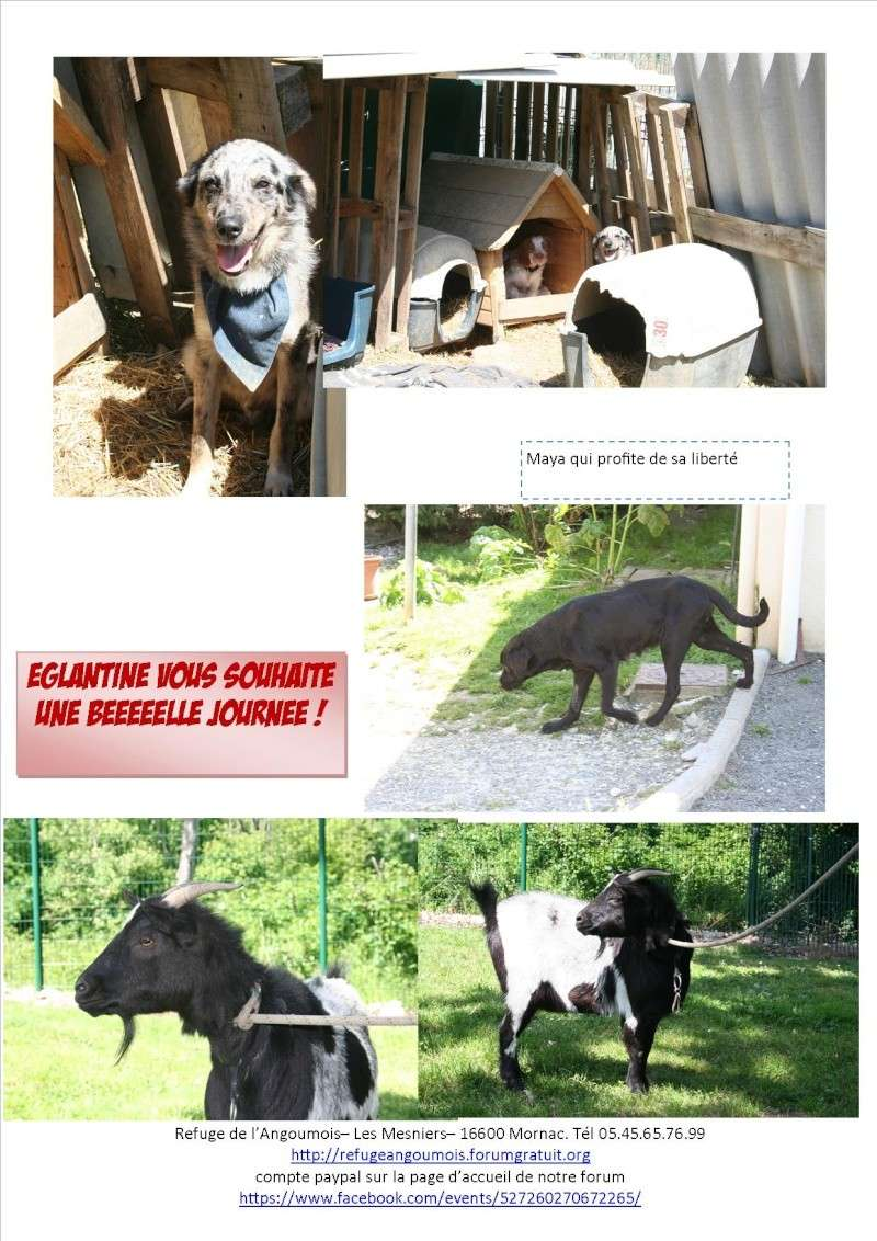 Nouvelles des animaux d'Ecuras du 060613 Nouvel60