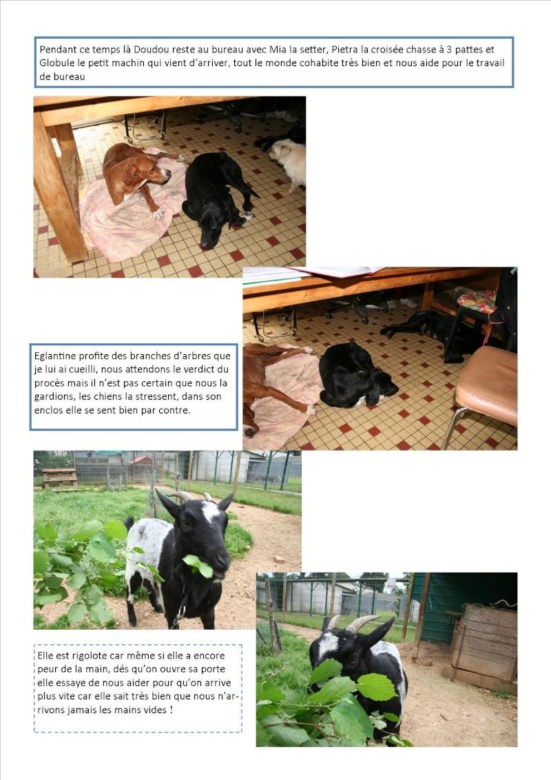 Nouvelles des animaux d'Ecuras du 10 06 13 Nouvel65