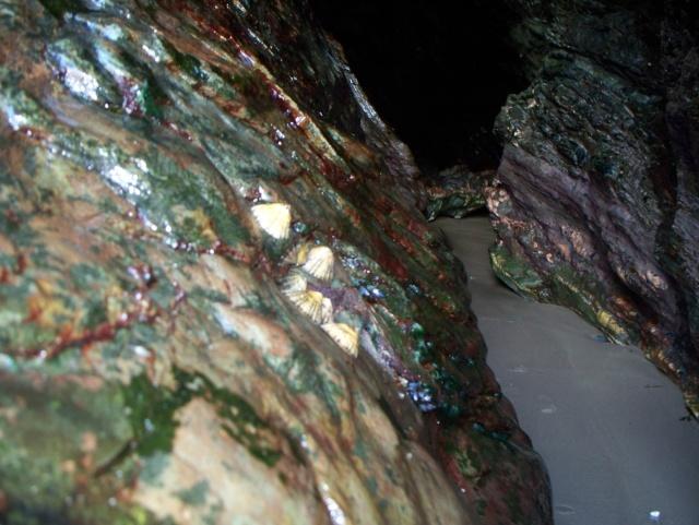 Holy Island Caves 100_0713