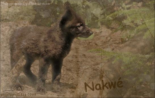 Nakwé/ M / Eirwer Signa_41
