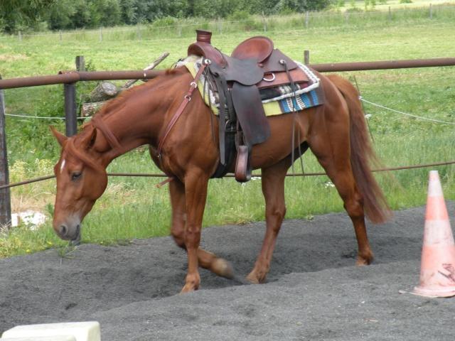 Photo selle western ! Dscn0210