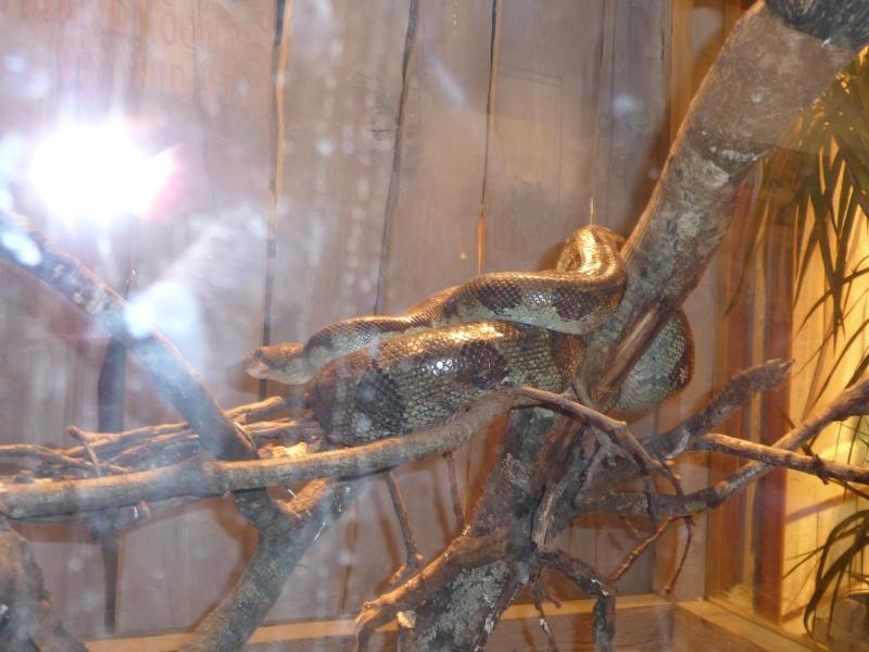 Nausicaa 2009 P1000414