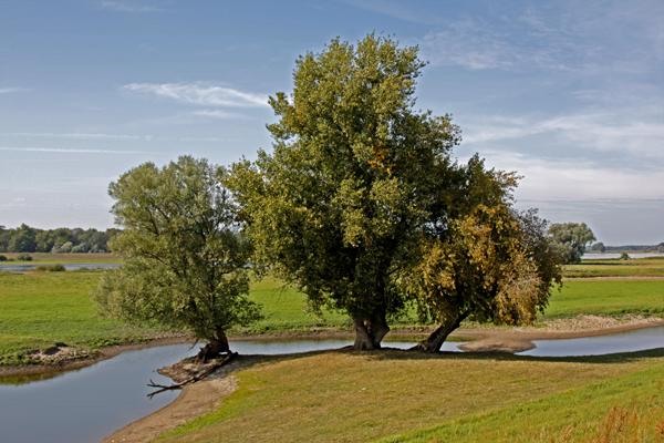 Fotoprojekt - Bäume - Seite 3 Elbe3k10
