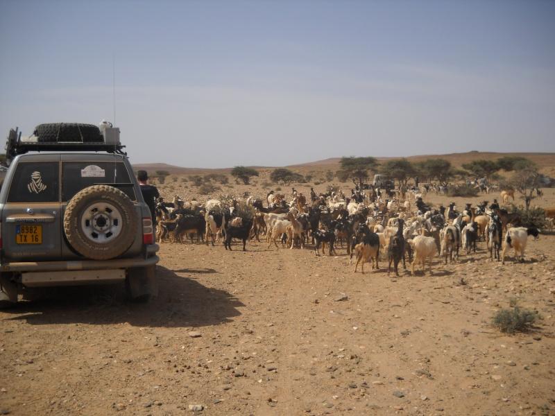 retour maroc avril 2013 Dscn2317