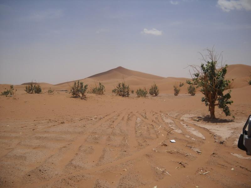 retour maroc avril 2013 Dscn2331