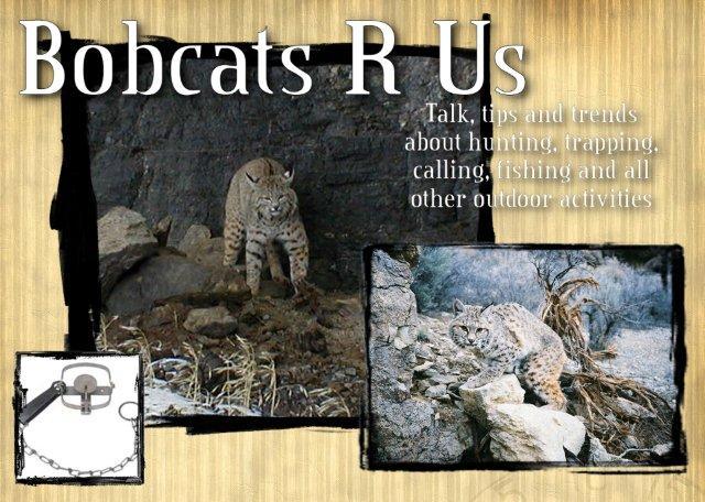 Bobcats R Us