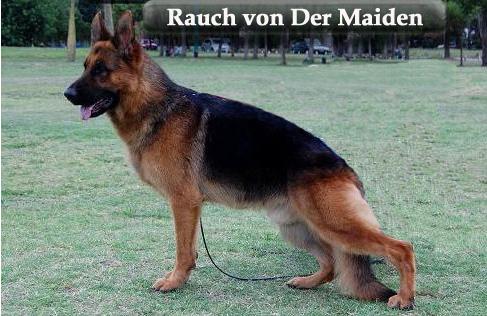 RAUCH VON DER MAIDEN Dibujo11