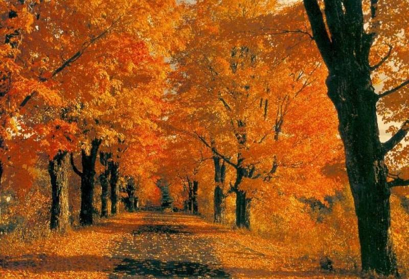 Bosco d'autunno Autunn10