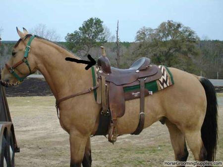 taille selle western... (je n'y connais rien!!!!:S) Sans_t10