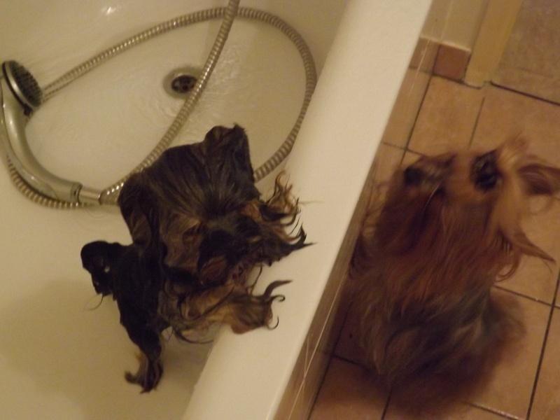 """une tite grenouille au bain """"love"""" Essai_17"""