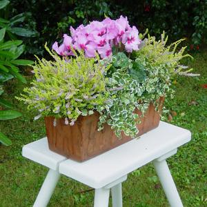 quelles fleurs pour jardinieres d hiver?? 1_cycl11