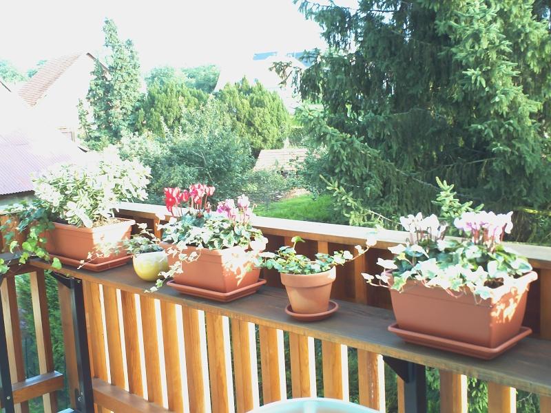 quelles fleurs pour jardinieres d hiver?? Pict0010
