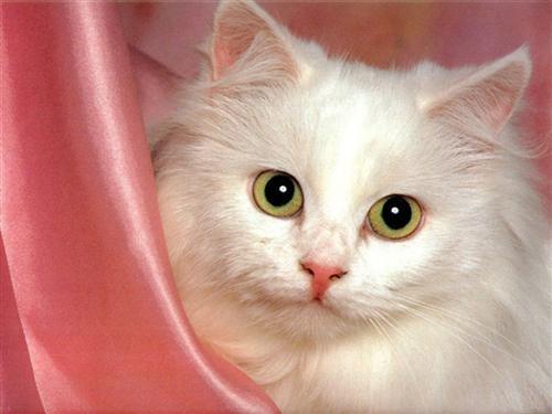 le langage du chat 121210